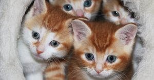 Best Pet Supplies and Tips for Kittens and Puppies (2020)