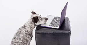 How to Have a Meaningful Video Chat … With Your Dog